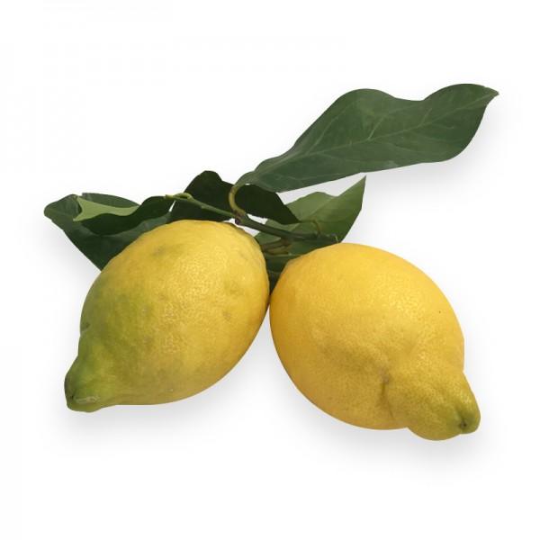 Zitrone Amalfi mit Blatt